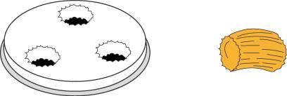 Matrize Nudelmaschine für Gnocchi